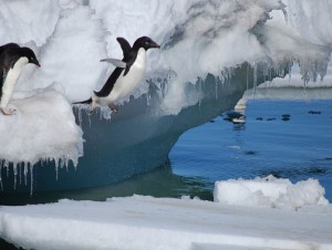 J_penguin_flying